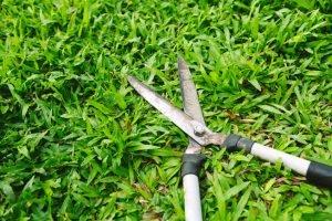 Rost von Heckenschere entfernen