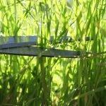 Mit Heckenscheren Gras schneiden – geht das?