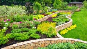 Projekt Garten – diese Pflanzen gehören im Frühling besonders gepflegt